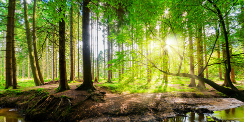 Lichtdurchflutetes Waldstück